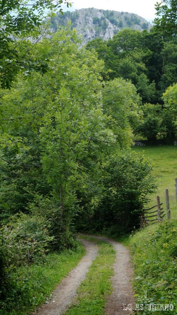 Las paredes rocosas del desfiladero, asoman tímidamente entre los árboles.