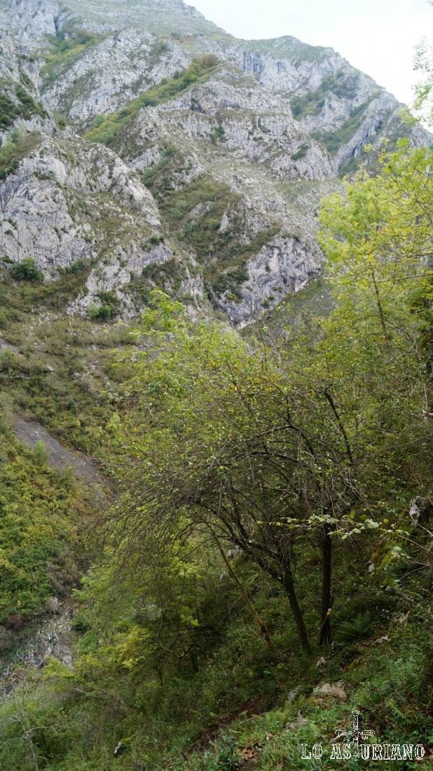 Al otro lado de los Beyos, comienza el Parque Regional de Picos de Europa.