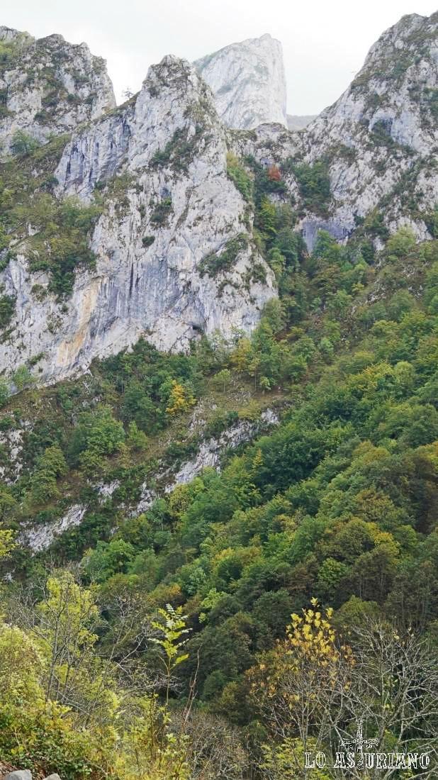 El agreste Parque Natural de Ponga, Asturias.
