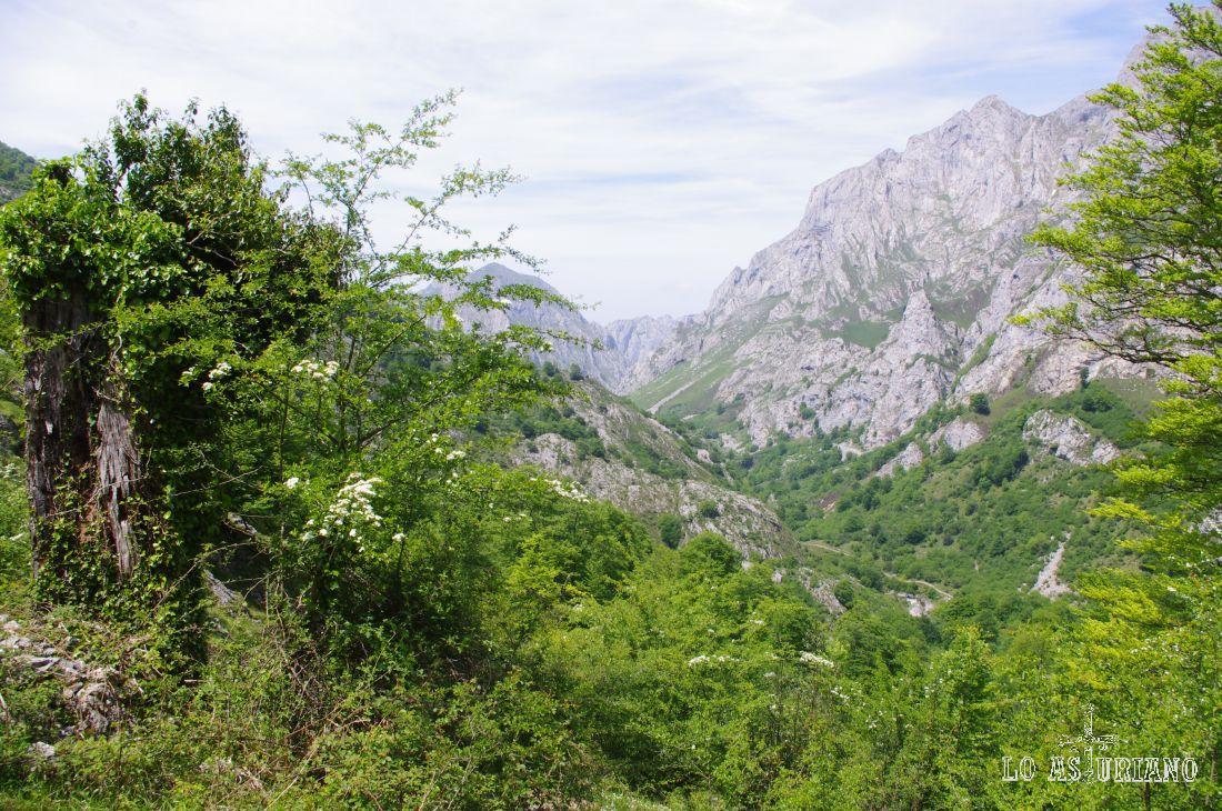 Las distintas zonas de Asturias son reconocibles por sus paisajes, colores y por la forma de las montañas. Aquí en esta zona de Amieva, los Picos de Europa, son los que le dan su identidad y fuerza.
