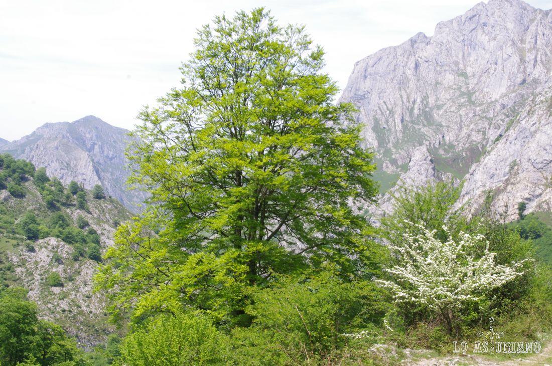 El señor árbol, de verde, y su hijito, de blanco... :)