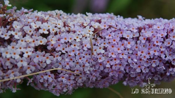 Detalle con el zoom de esta preciosa flor violeta.