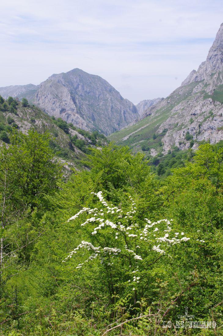 Al fondo el valle de Angón.