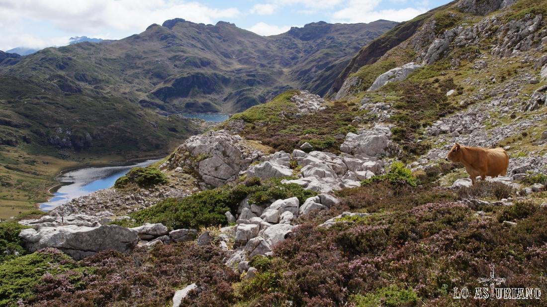 Lagos de Cerveiriz y Calabazosa, subiendo a los picos Albos. En Somiedo, Asturias.