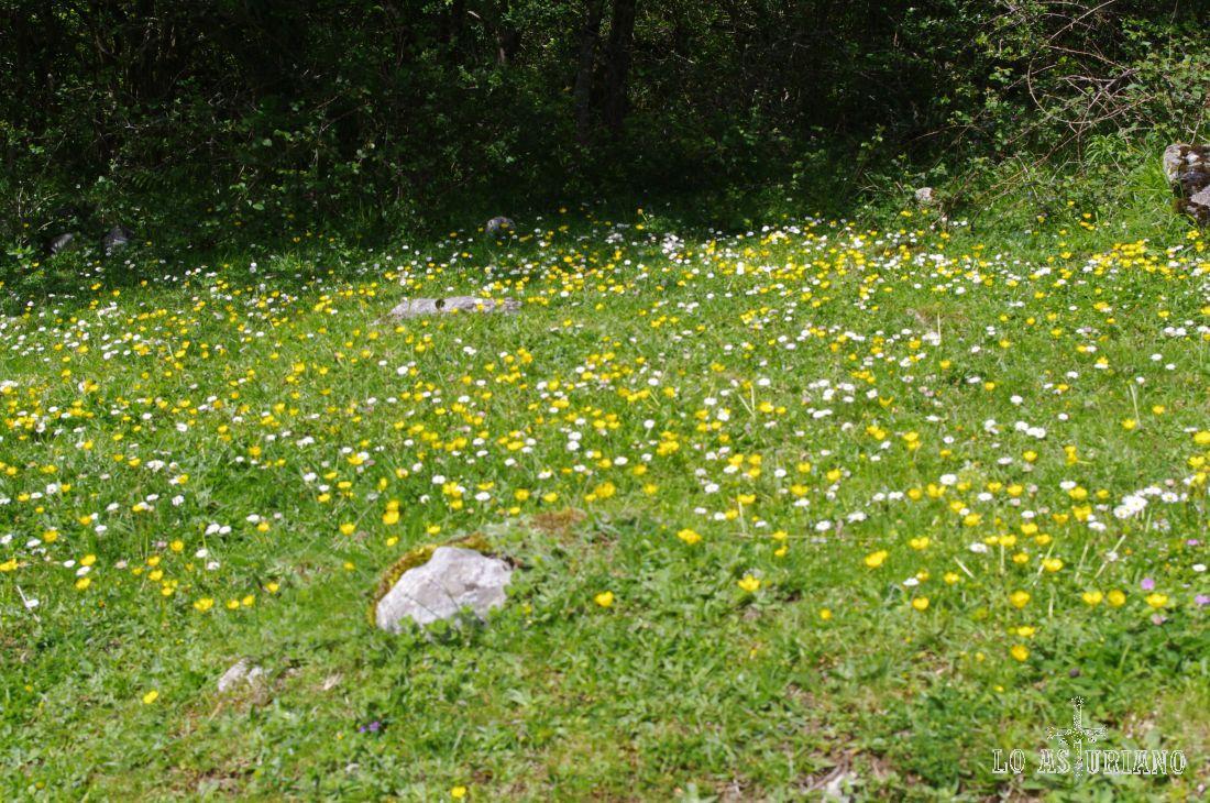 Primavera en las praderías de Amieva.