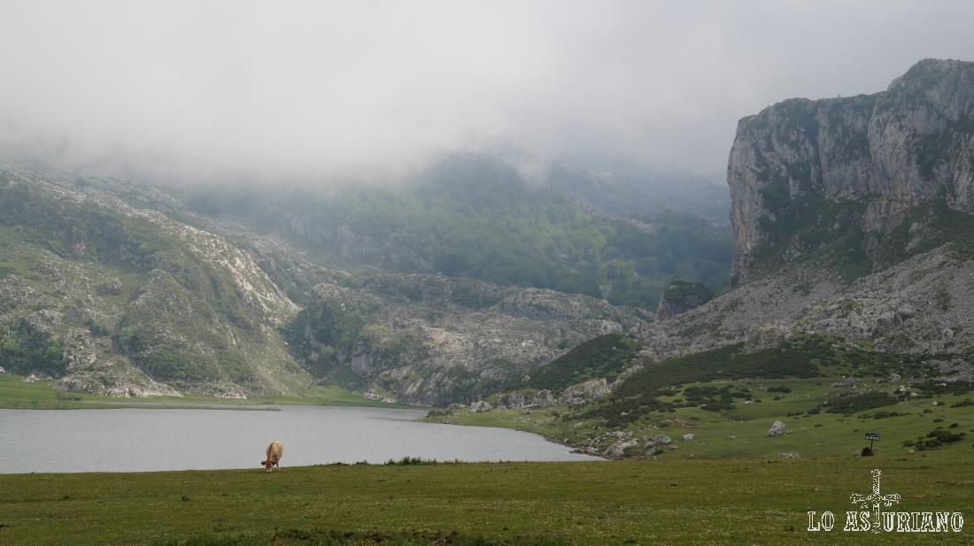 El precioso lago de la Ercina y detrás el hayedo.