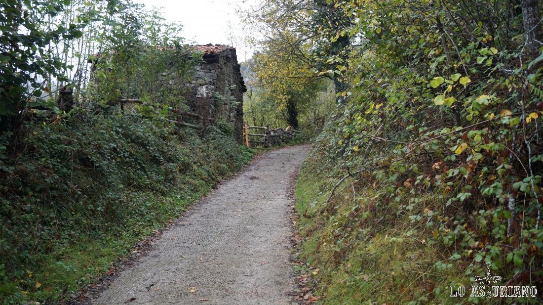 Camino de una de las grandes vegas de Redes: la Vega Baxu.