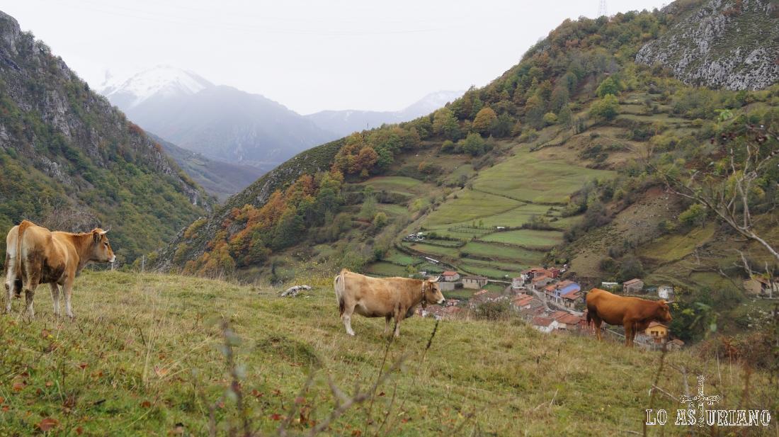 Vacas y el pueblín de Pendones abajo.