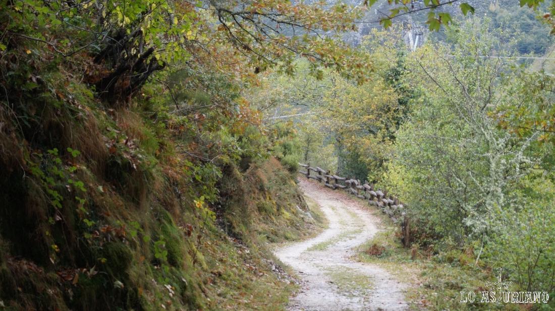 Espectacular camino en Caso, Asturias.