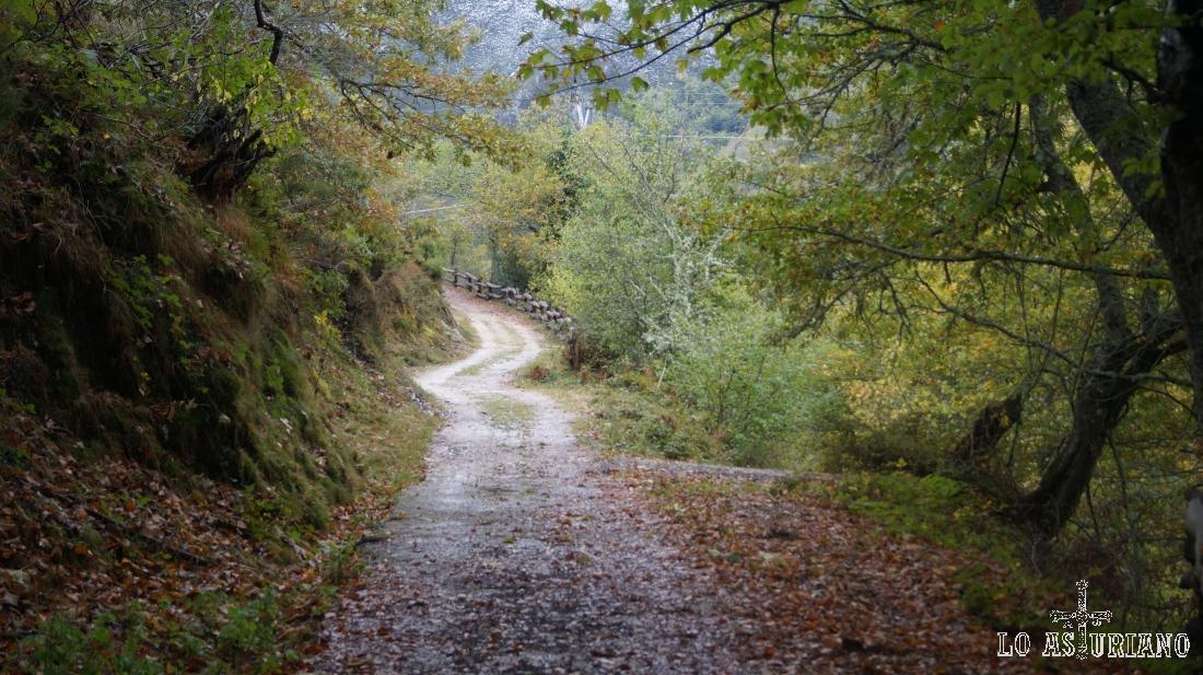 Las frondosas jalonan el camino y dan ese colorido tan otoñal.