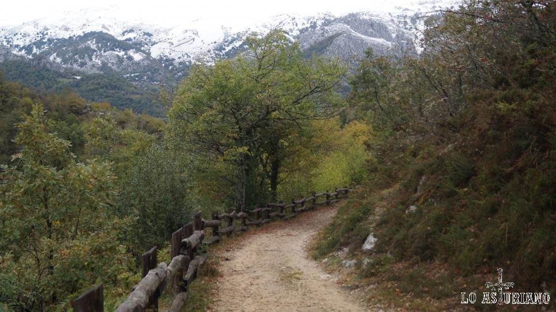 La maravillosa pista hacia Vega Baxu, en el Parque de Redes.