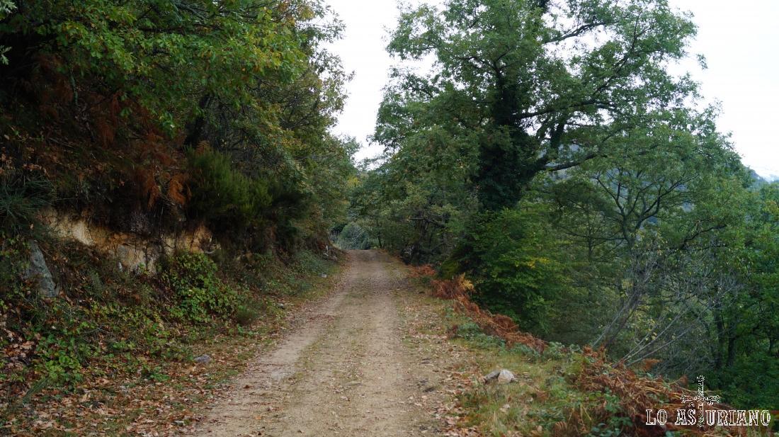 Camino a Vega Baxu, vega del Parque de Redes.