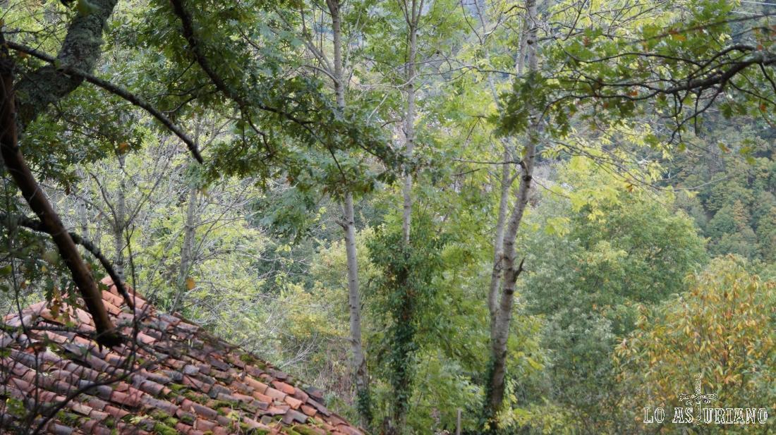 Cabaña en el entorno de la Vega Baxu, Redes, Asturias.