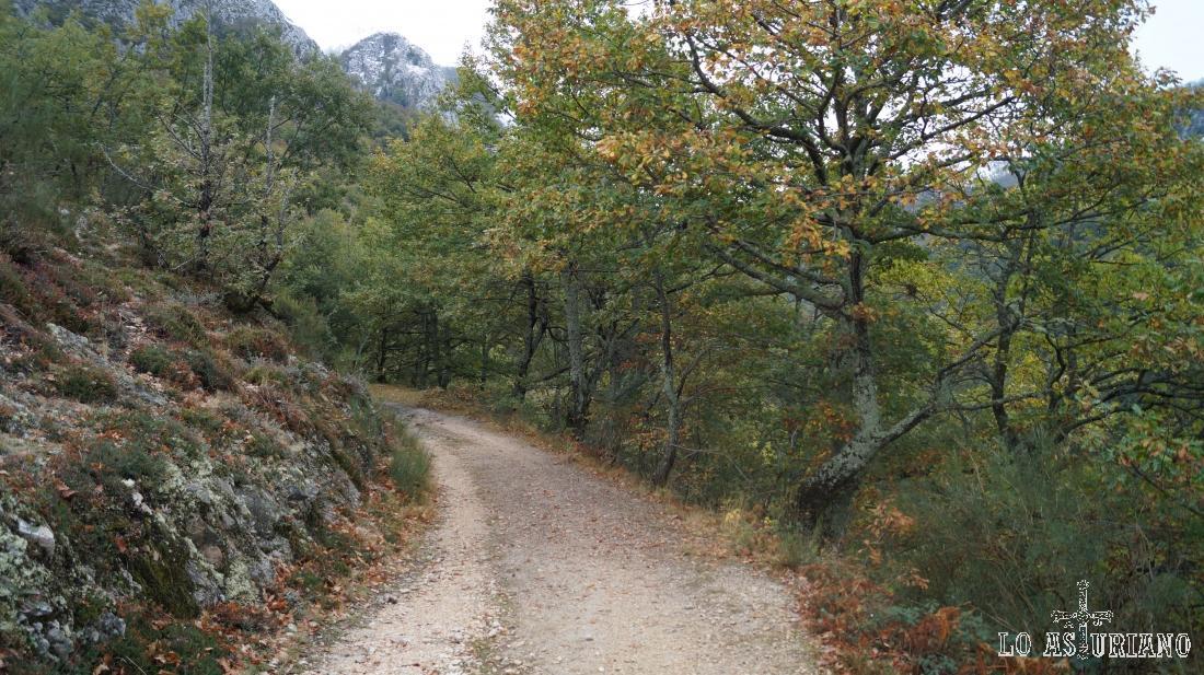 El Cerro la Roza, asoma al fondo.