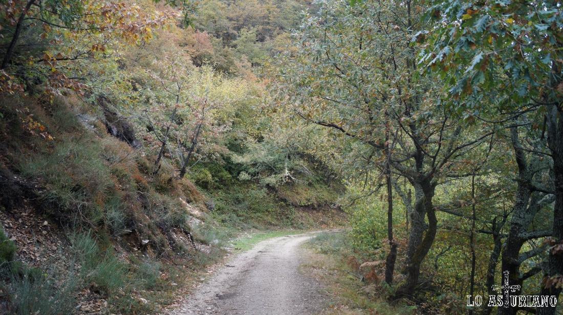 Las laderas de La Roza, camino de Vega Baxu.