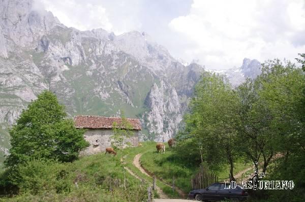 Majada en Cuetu Argón, con los Picos de Europa (Cornión), al fondo.