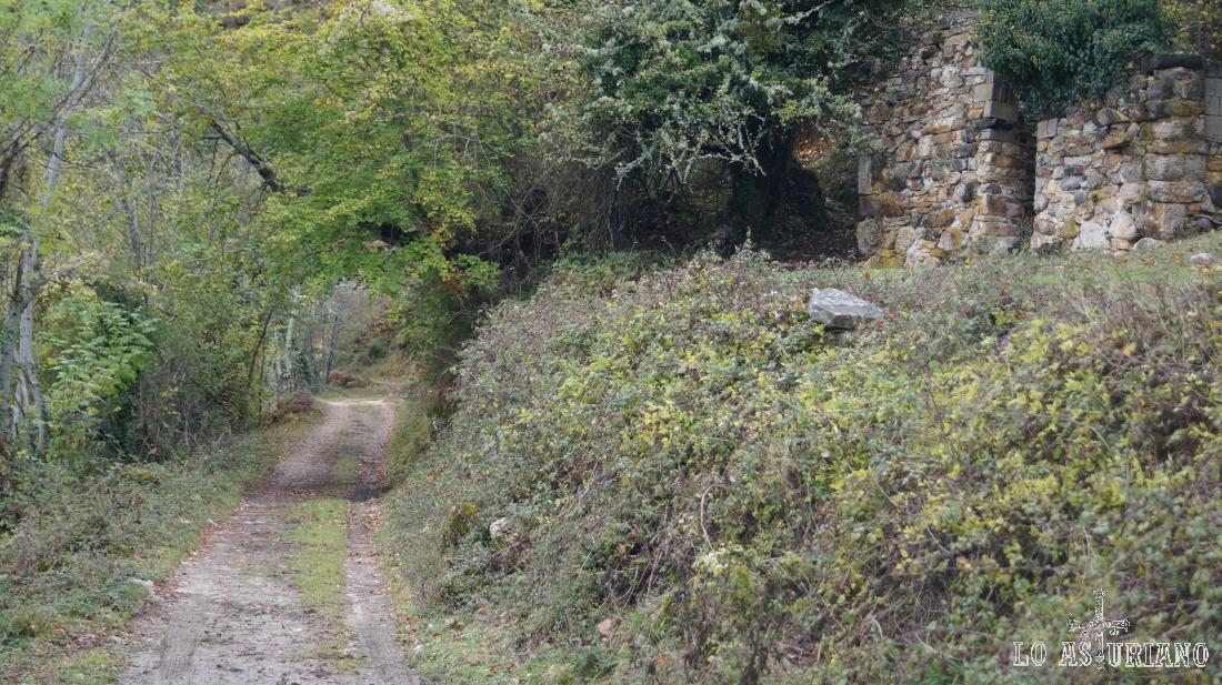 Cabaña cubierta por la vegetación.