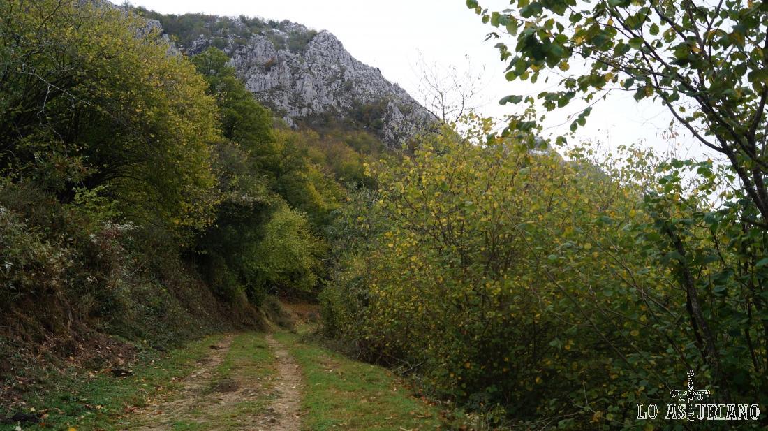 El camino sube cómodamente hacia los bosques del entorno del Maciédome.