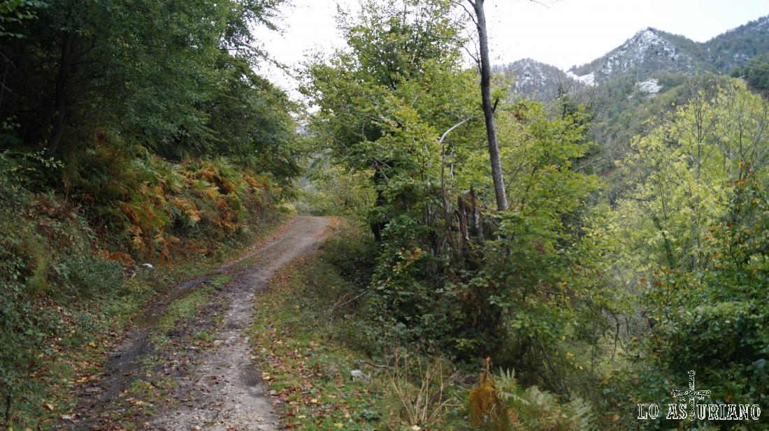 El robledal, hayedo y bosque mixto, nos acompañarán durante esta bonita ruta.