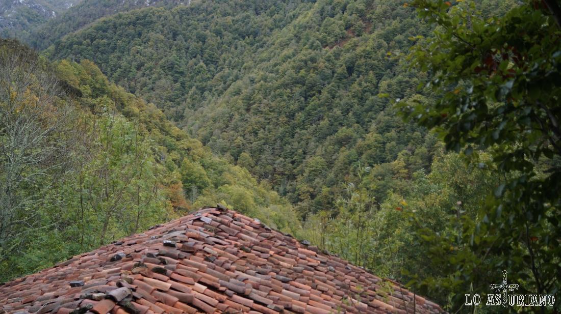 Espectaculares bosques del Parque Natural de Redes, Asturias.