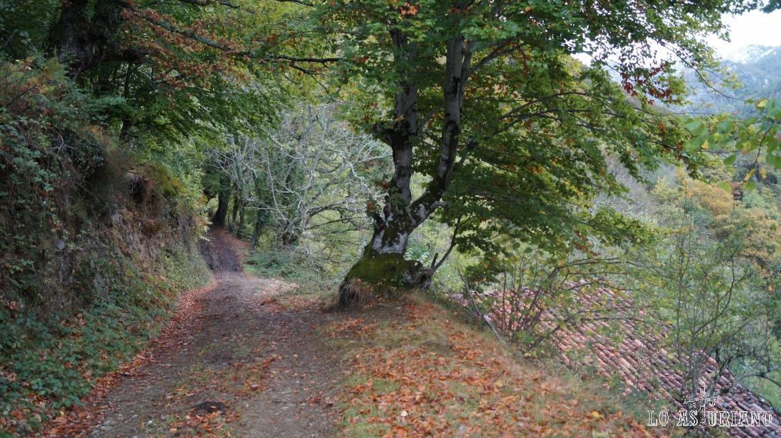 Rutas senderistas en el entorno de Pendones, Caso, Asturias.