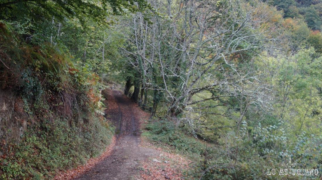 Caminos y sendas en el paraíso natural de Redes.