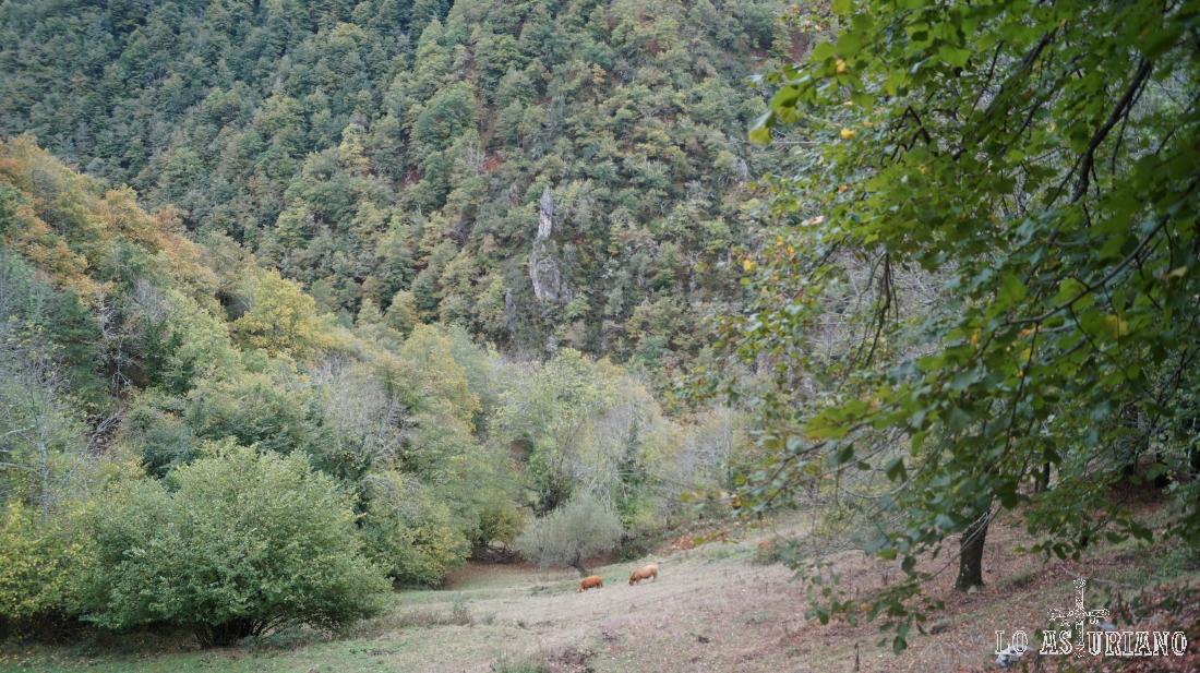 Vacas y bosques en Redes.