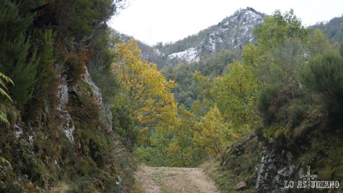 Los colores del otoño en las partes bajas y los del invierno en las más altas.