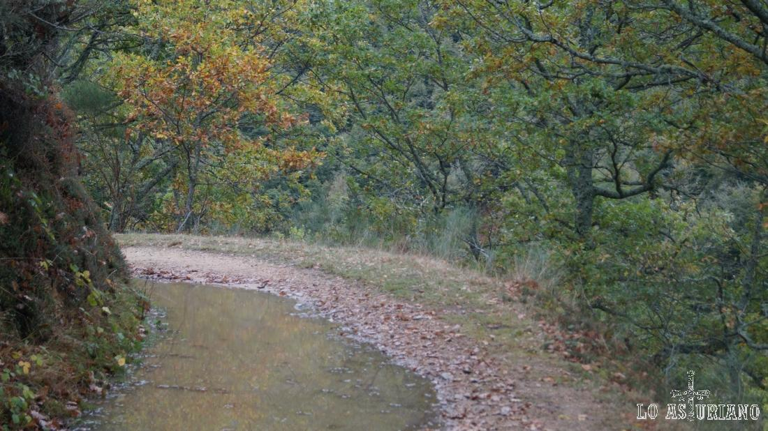 Reflejos de las frondosas en los charcos del camino.