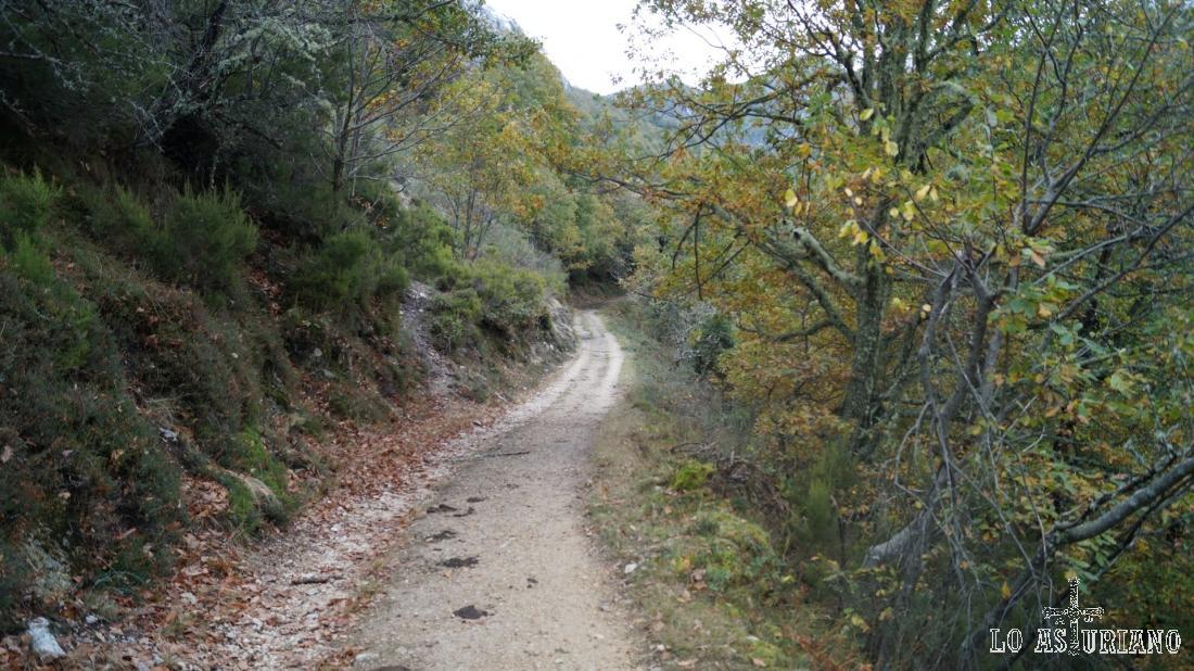 La pista mantiene su anchura y comodidad, de principio a fin de la ruta.