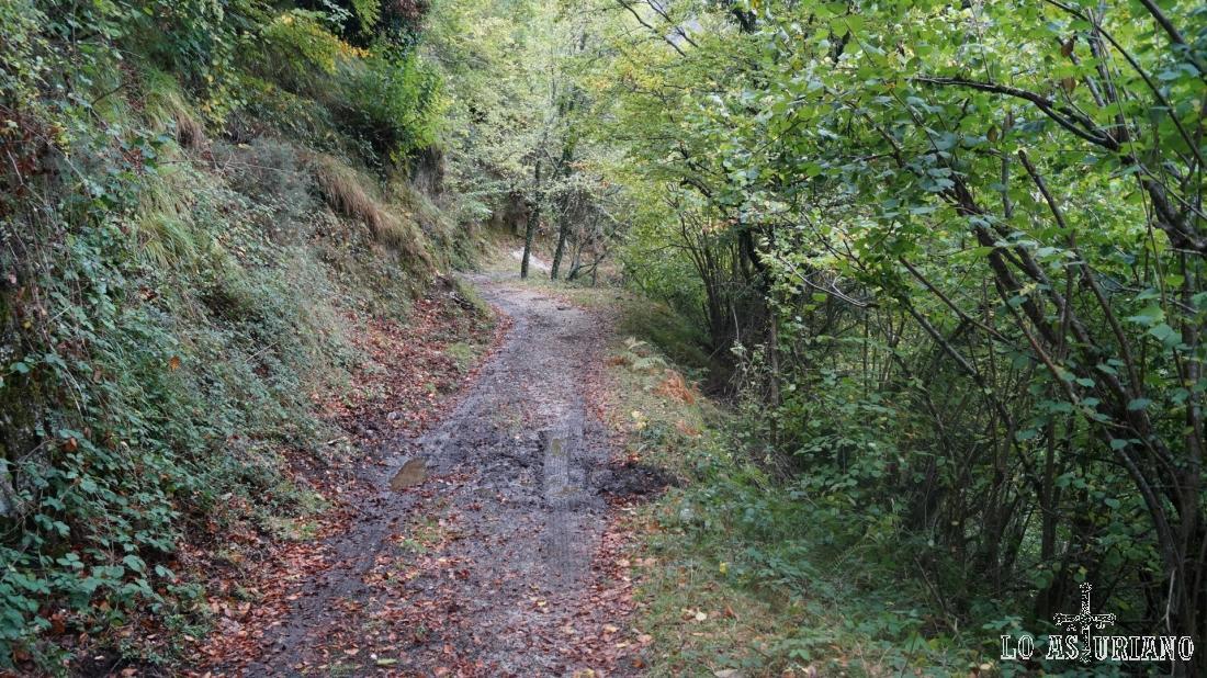 A partir de esta zona, vega Riba, la pista se va a ir empinando un poco.