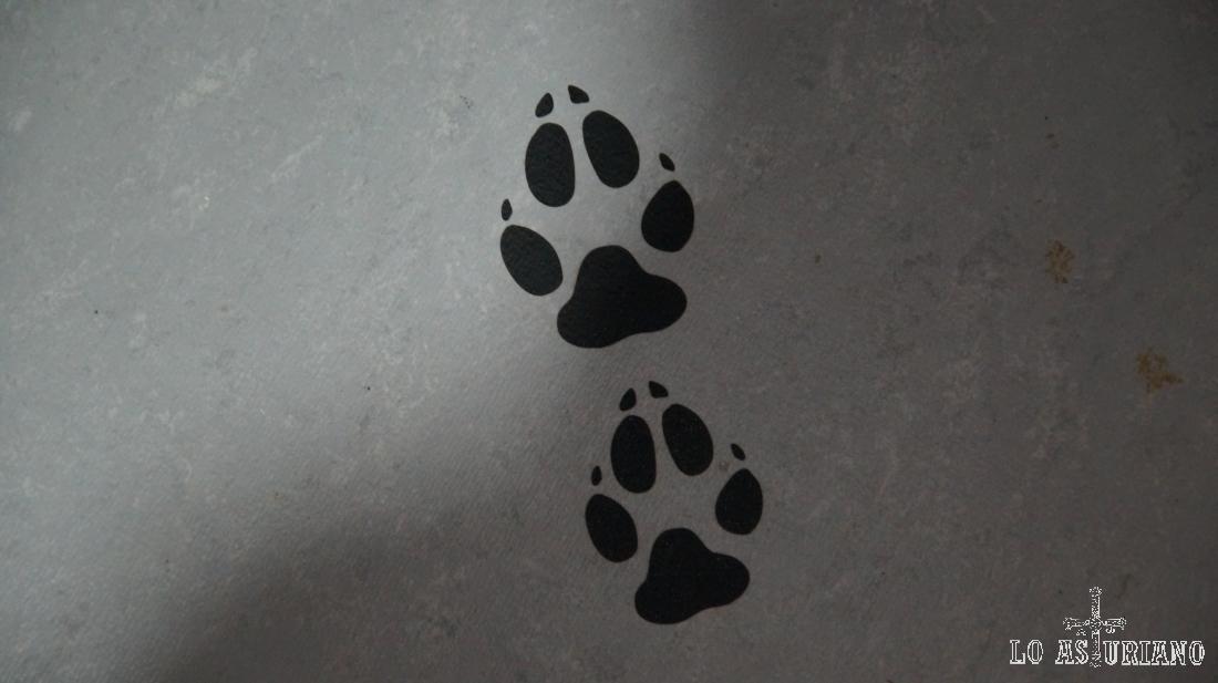 Las huellas del Lobo en el suelo de la Casa del lobo de Belmonte.