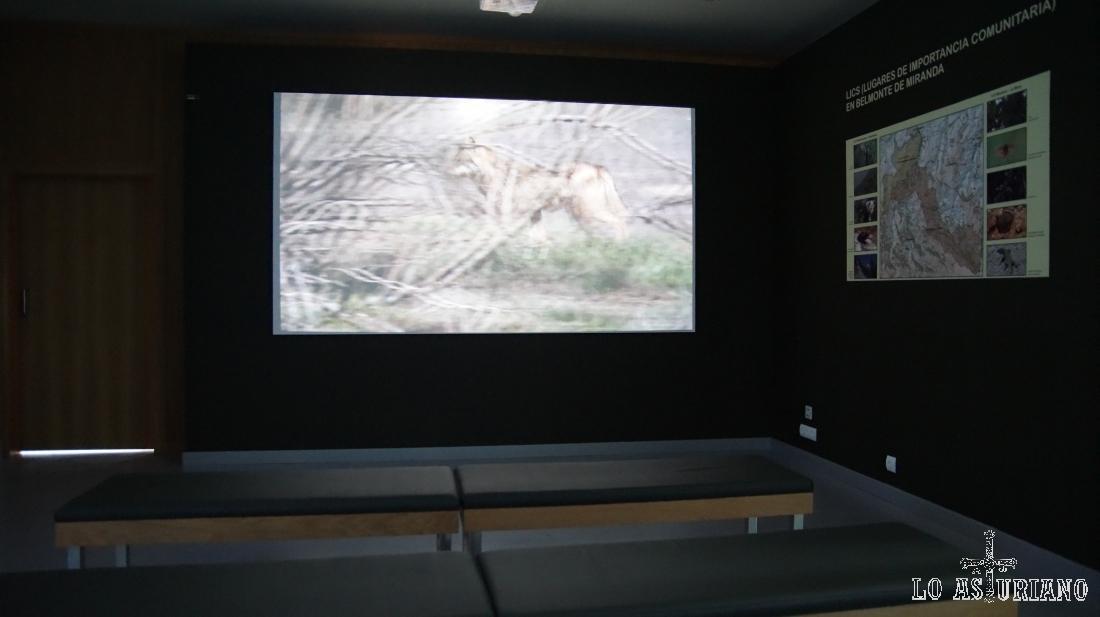 Sala de audiovisuales de la Casa del Lobo.