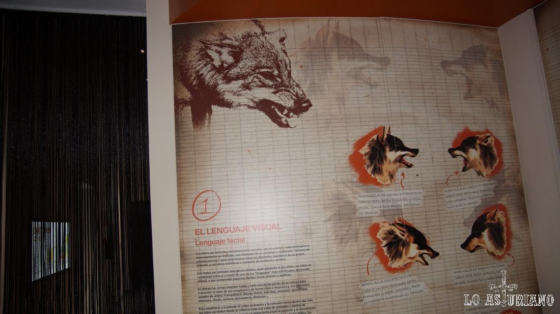 Los paneles te dan incluso la opción de escuchar el aullido del lobo en distintas situaciones.