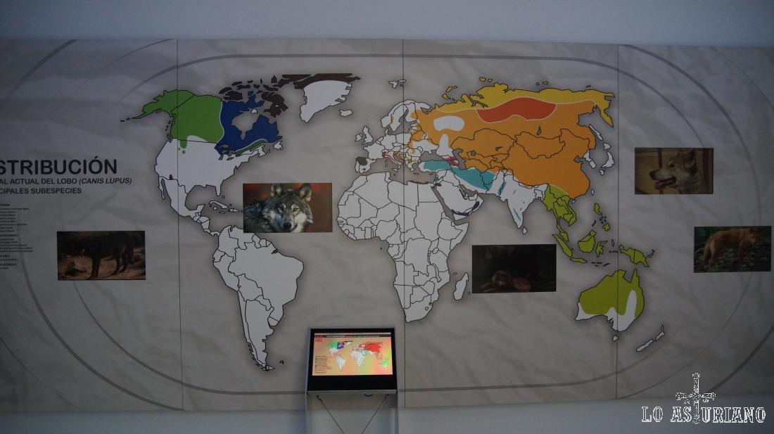 Mapa interactivo sobre la presencia del lobo en el mundo.