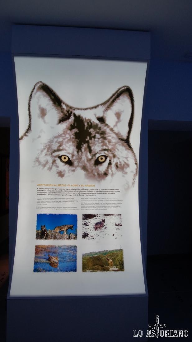 Paneles interactivos de la Casa del Lobo, en Belmonte, Asturias.