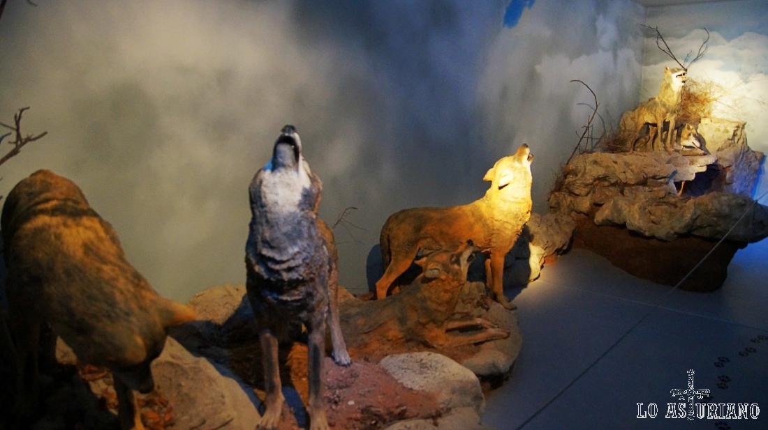 Figuras de lobos ibéricos, que van acompañados de aullidos por audio de fondo.