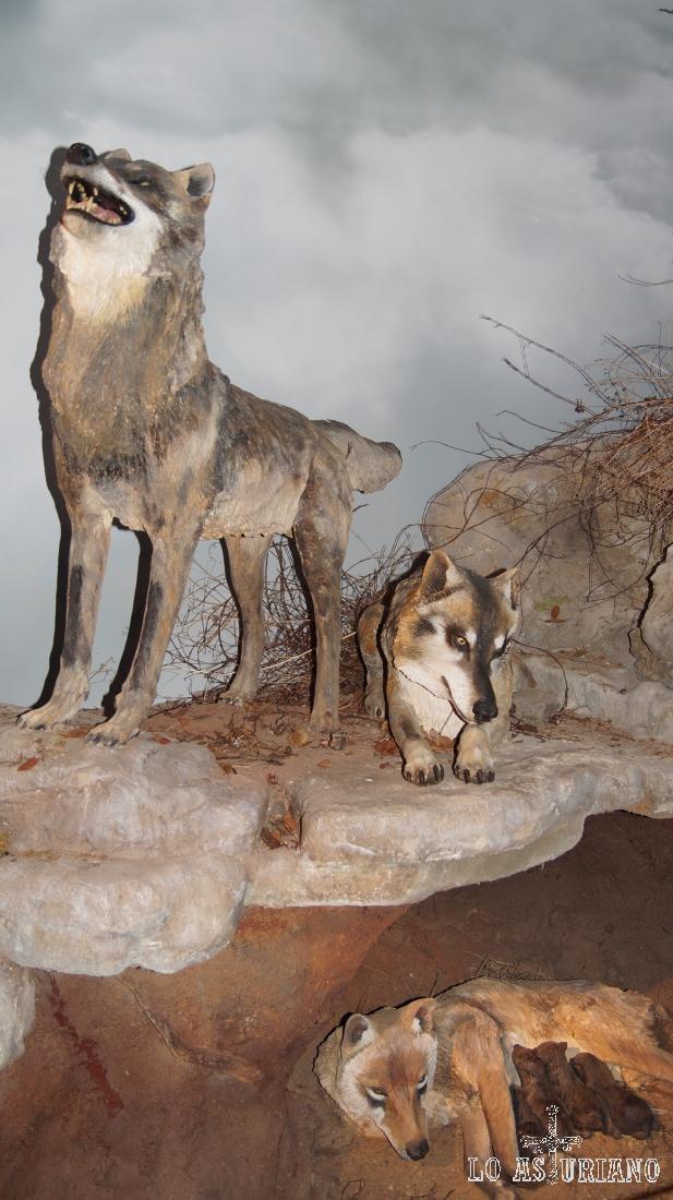 Figuras del lobo ibérico.