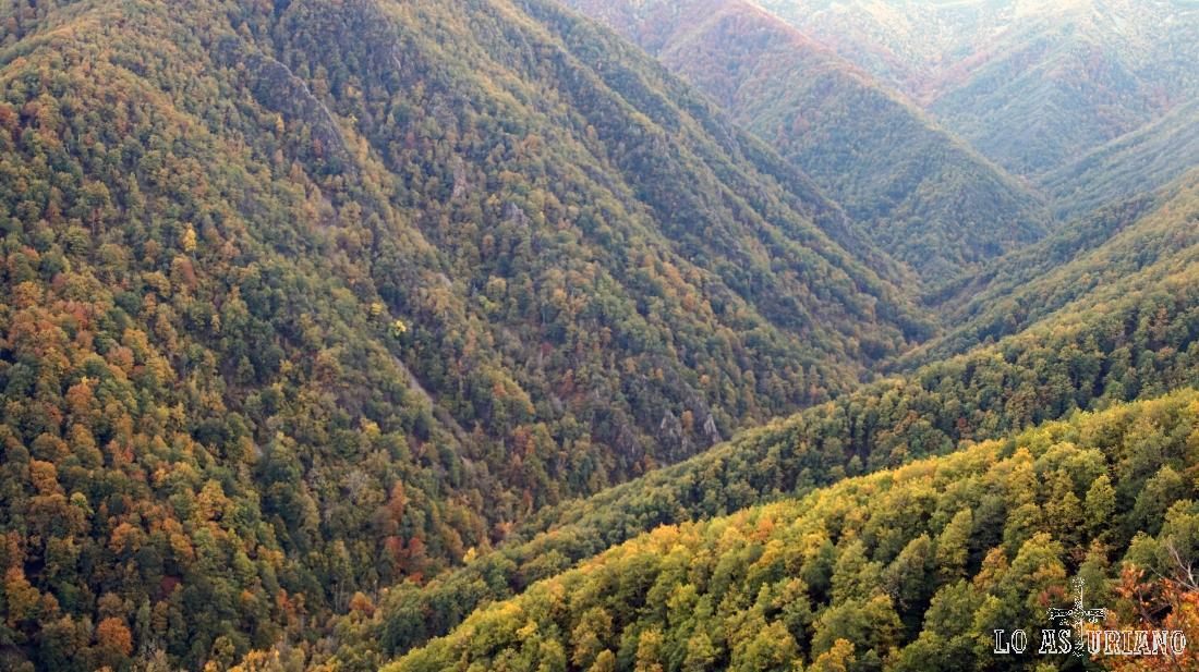 Foto de los bosques de Muniellos.