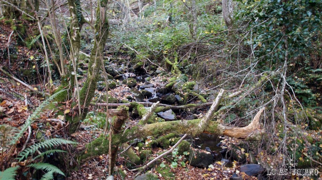 El arroyo de Ordalecha, en los bosques de Monasterio de Hermo.