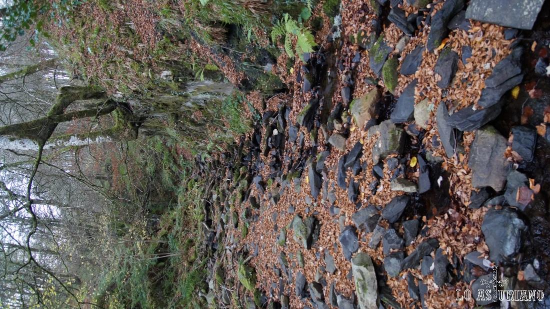 Arroyo seco en el hayedo.