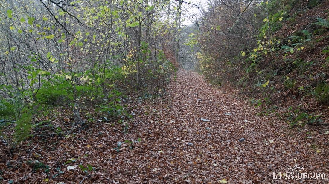 El manto de hojas otoñal, cubre la pista.