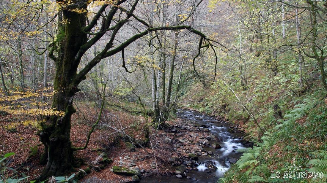 El río Narcea, en un precioso paisaje del Parque Natural de las Fuentes del Narcea, Asturias.