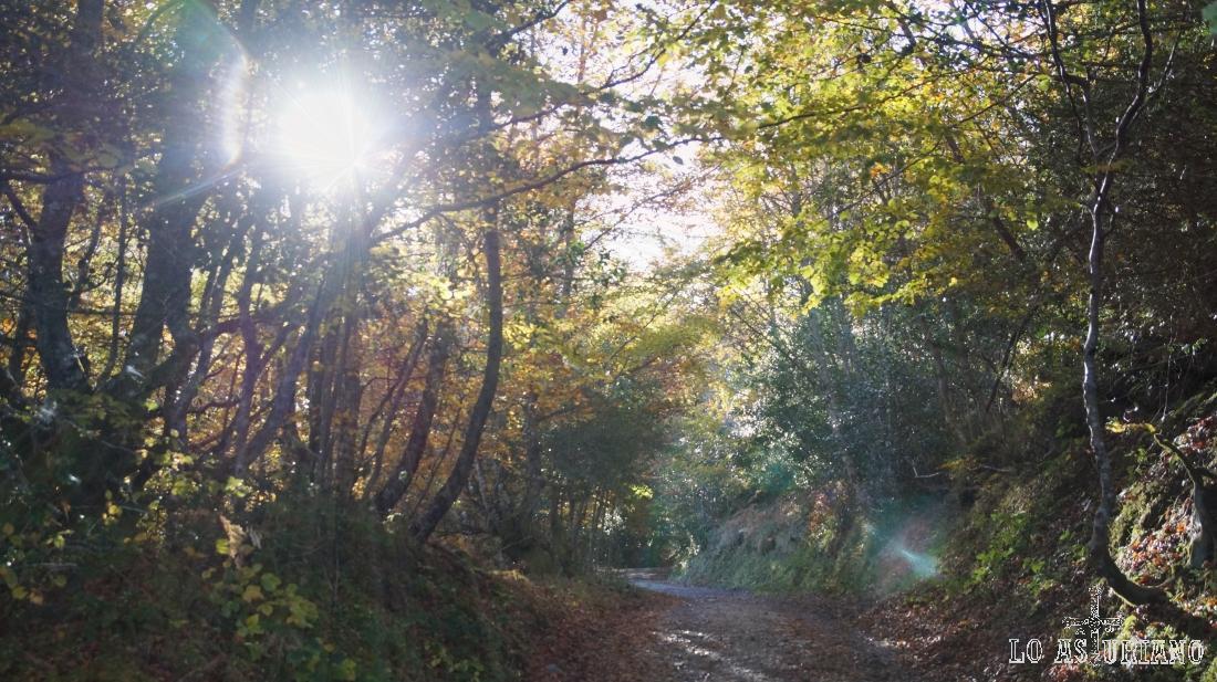 Pista adentrándose al bosque de Peloño, uno de los mayores de Asturias.