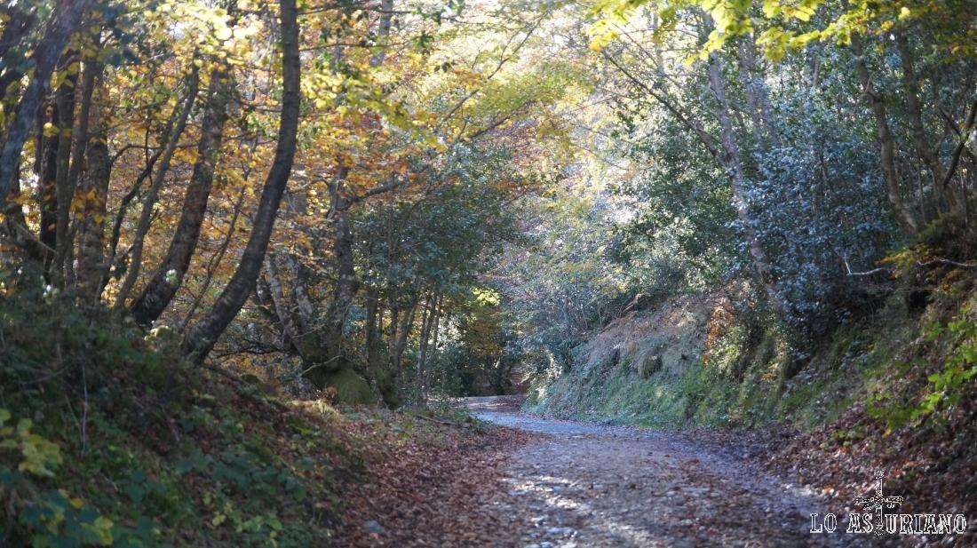 Bosque de Peloño, concejo de Ponga.