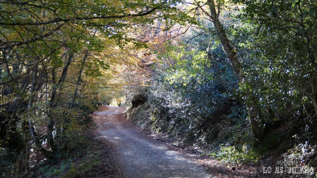 El otoño es un mes ideal para adentrarse en los hayedos ponguetos.