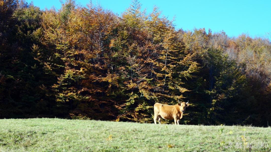 Vaca en prado.