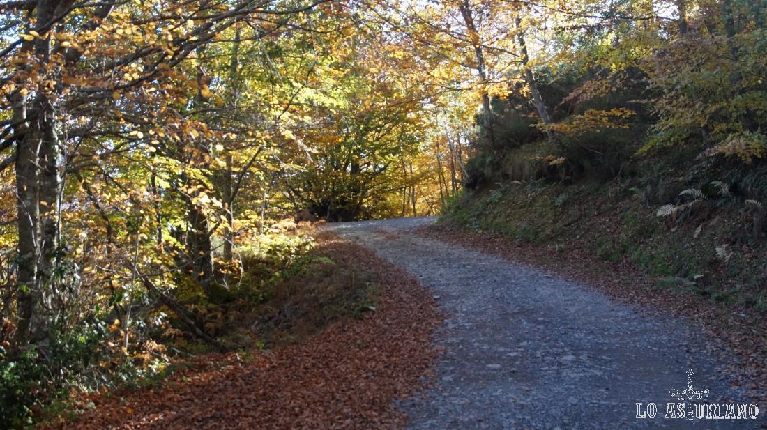 Pista de Peloño, bordeada con las hojas secas rojizas.