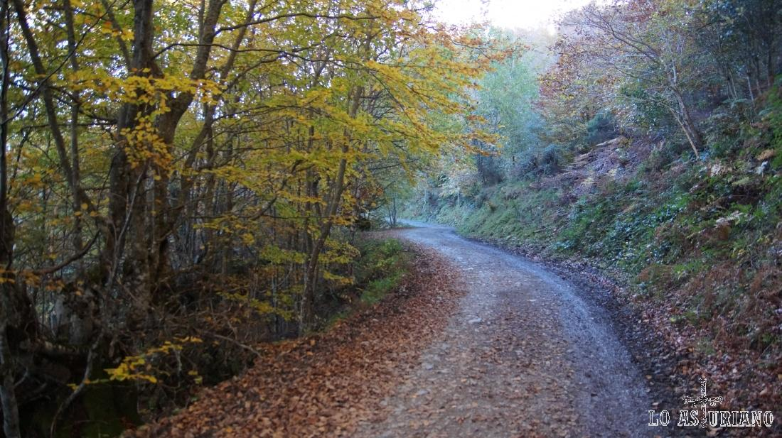 La pista del magnífico hayedo de Peloño, en Ponga, Asturias.