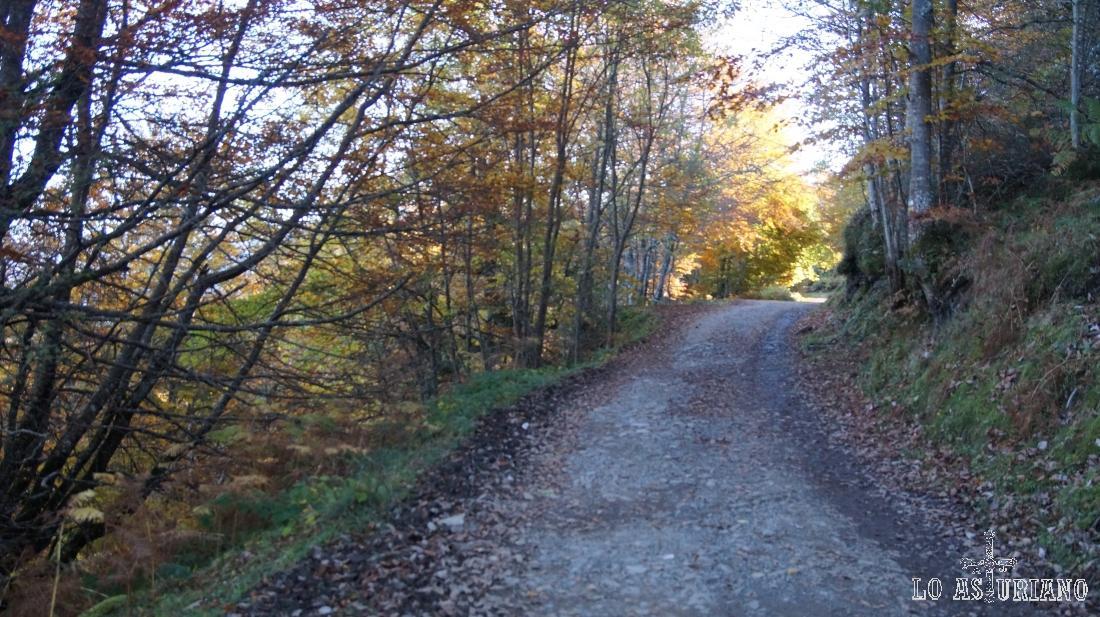 La plácida pista que atraviesa el bosque de Peloño.